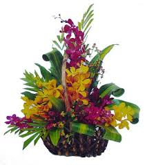 20 orchids basket