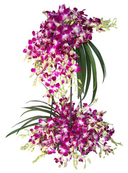 20 orchids 2 tier arrangement