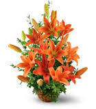 10 orange lilies basket